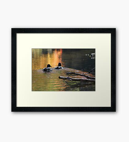 The Leading Ducks Framed Print