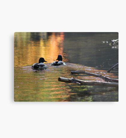 The Leading Ducks Metal Print