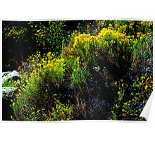 """Colorful Vegetation"" Poster"