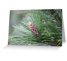 Pine Cone 3075 Greeting Card