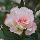 Pink Rose with Buds by STHogan