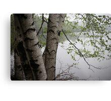 Birch Tree Waterscape 3229  Metal Print