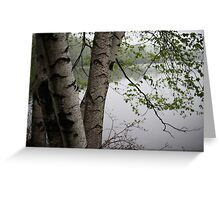 Birch Tree Waterscape 3229  Greeting Card