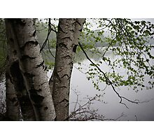 Birch Tree Waterscape 3229  Photographic Print
