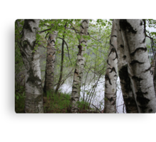 Birch Tree Waterscape 3228 Canvas Print