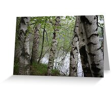 Birch Tree Waterscape 3228 Greeting Card