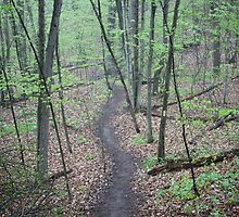 Ravine Trail 3307 by Thomas Murphy