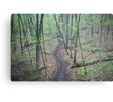 Ravine Trail 3307 Metal Print