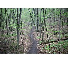 Ravine Trail 3307 Photographic Print