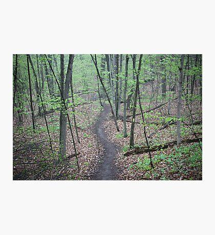 Ravine Trail 3307 Photographic Print