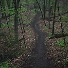 Ravine Trail 3310 by Thomas Murphy