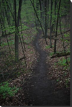 Ravine Trail 3310 by Thomas Murphy