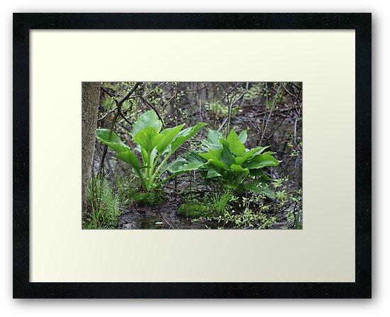 Ravine Trail Vegetation 3281 by Thomas Murphy