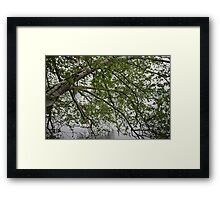 Birch Tree Waterscape 3129 Framed Print