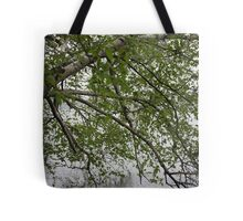 Birch Tree Waterscape 3129 Tote Bag
