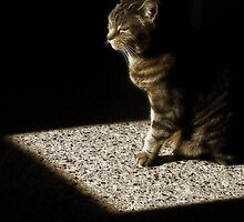 Cat in Patch of Sunlight by Jane Underwood