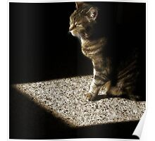 Cat in Patch of Sunlight Poster