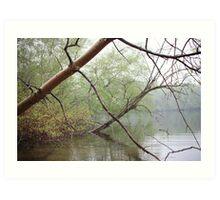 Birch Tree Waterscape 3203 Art Print