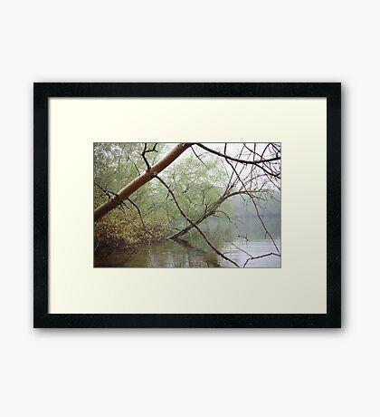 Birch Tree Waterscape 3203 Framed Print