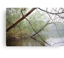 Birch Tree Waterscape 3203 Metal Print