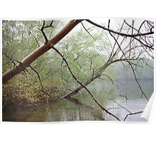 Birch Tree Waterscape 3203 Poster