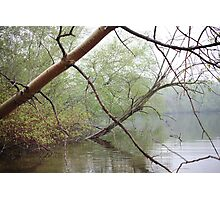 Birch Tree Waterscape 3203 Photographic Print