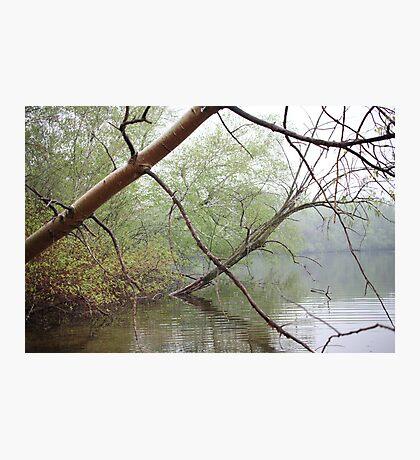 Birch Tree Waterscape 3203 Photographic Print