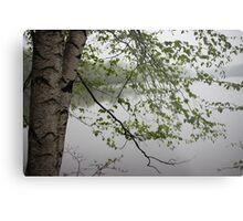 Birch Tree Waterscape 3235 Metal Print