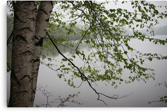 Birch Tree Waterscape 3235 by Thomas Murphy