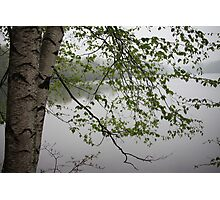Birch Tree Waterscape 3235 Photographic Print