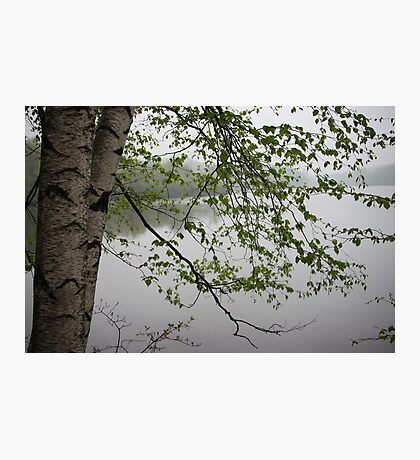 Birch Tree Waterscape 3235 Photographic Print