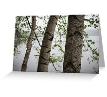 One Two Three Birch Tree 3238 Greeting Card