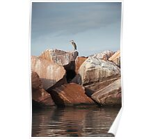 Blue Heron on Red Rock Poster