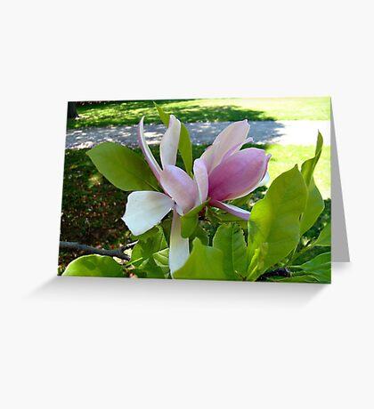Magnolia in Spring Greeting Card