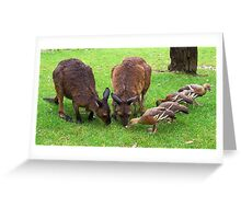 Feeding Formation Greeting Card