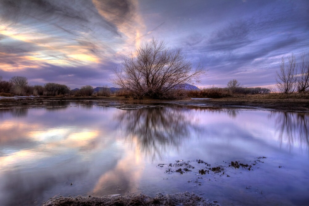 VioJet Sunset by Bob Larson