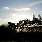 Sun through the pines by Karen  Betts