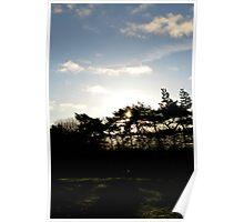 Sun through the pines Poster