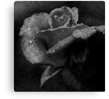 Rose one Canvas Print