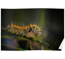 Caterpillar on brench Poster