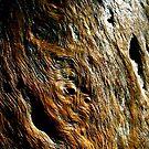Eucalyptus Bark by Jasmine Staff