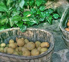 Fruit glorious fruit by hannahbraid