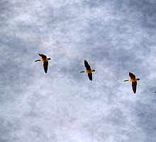 The Flying Quintet by Brian Gaynor