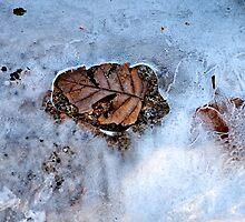 Winter Thaw by Jeffrey  Sinnock