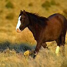 Mystery Stallion  by Jeanne  Nations