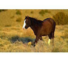 Mystery Stallion  Photographic Print
