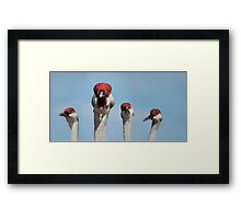 Curious Cranes Framed Print