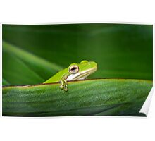 Intrepid Treefrog Poster