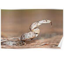 Snake in S Poster
