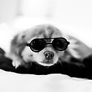 Pomchi - Sunglasses by sullyshah